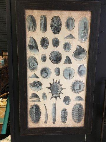 Beachcombed Framed Print
