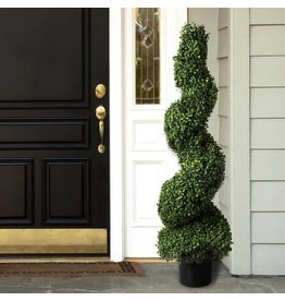 Romano Boxwood Spiral Topiary in Pot