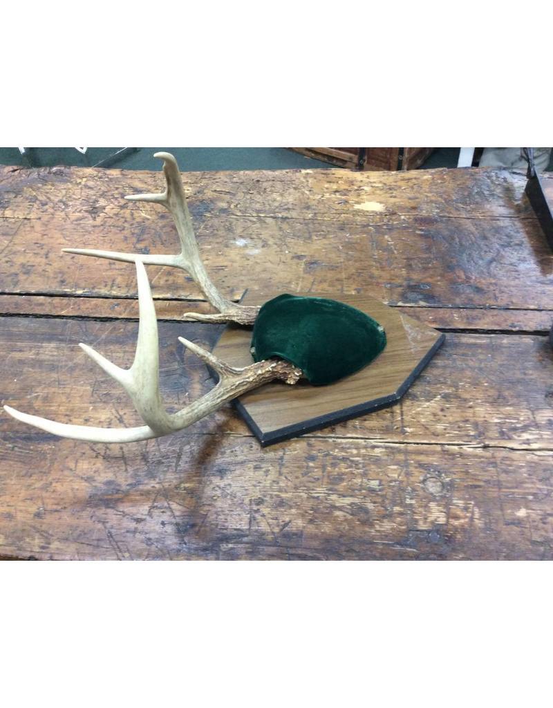 Vintage 8 Point Mounted Deer Antlers
