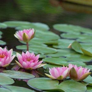 8/12: kenilworth aquatic gardens photo walk