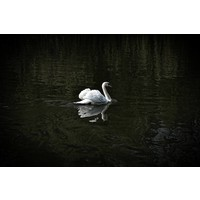Facemount Acrylic - Soft Swan 1/4 Inch Thick Acrylic Glass