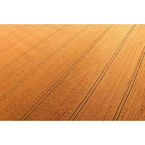 Facemount Acrylic - Harvest Lines 1/4 Inch Thick Acrylic Glass