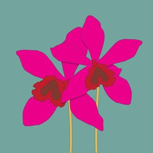 Print on Paper US250 - The Orchidaceae Pink Orchid