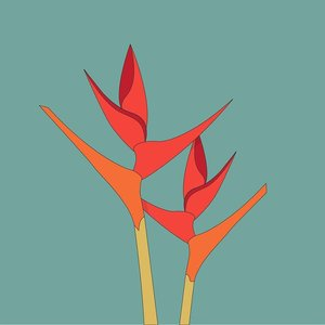 Print on Paper US250 - Bird of paradise flower Strelitzia