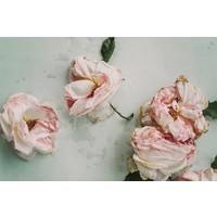 Facemount Metal - Roses Still Life UV Printed on Metal