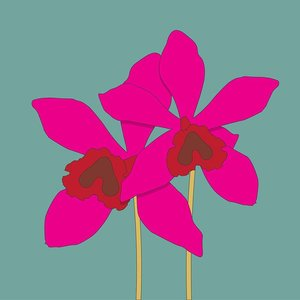 Print on Paper US250 - The Orchidaceae by Alejandro Franseschini