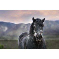 Print on Paper US250 - Percheron Print on Archival Paper