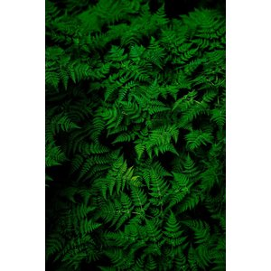 Print on Paper US250 - Fern by G. Geller
