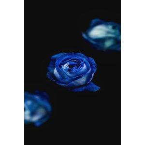Facemount Metal - A Rose is a Rose UV Printed on Metal