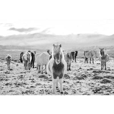 Print on Paper US250 - Wild Horses