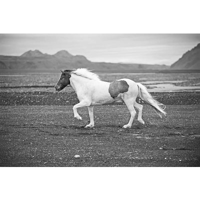 Print on Paper US250 - Mustang Horse