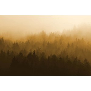 Facemount Acrylic - Blurred Forest 1/4 Inch Thick Acrylic Glass