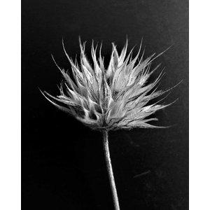 Print on Paper US250 - Fleur de Coton