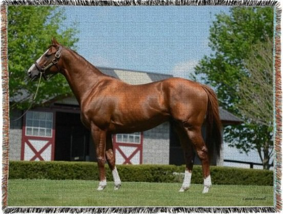 California Chrome Woven Blanket