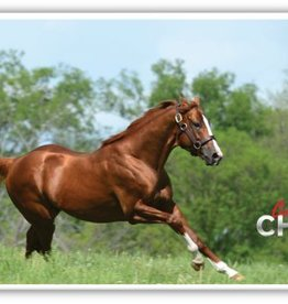 California Chrome iPhone Case 5s