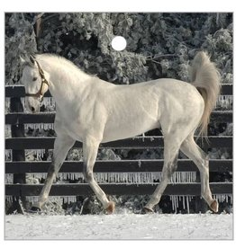 Unbridled's Song Glass Ornament