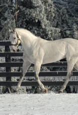 Unbridled's Song 8x10