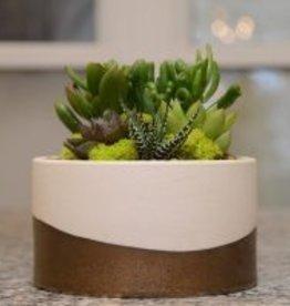 Everyday Succulent Bowl Workshop