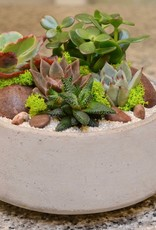 Everyday Succulent Bowl Mon. May 14