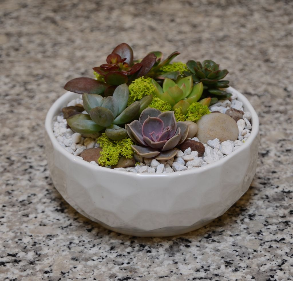 Everyday Succulent Bowl Tues. May 22