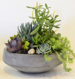 Everyday Succulent Bowl Mon. May 28