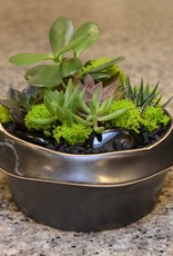 Everyday Succulent Bowl Wed. May 30