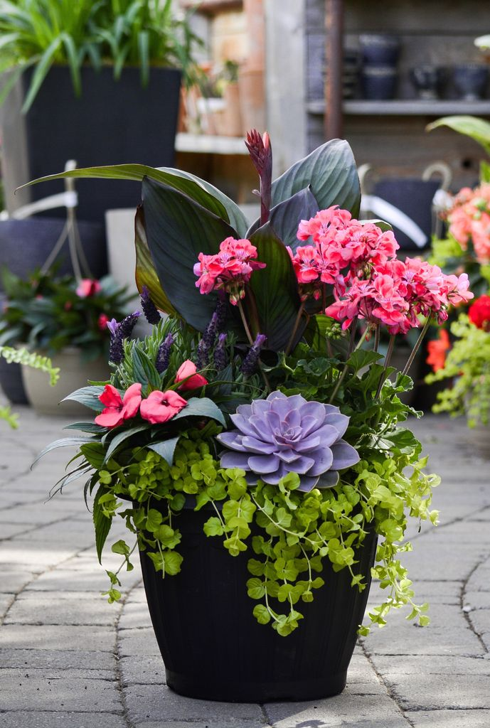Everyday Patio Planter Tues. May 15