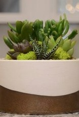 Everyday Succulent Bowl Tues. Sept 25