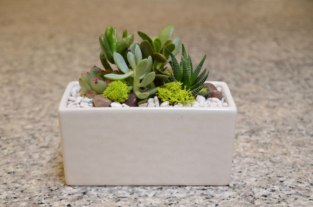 Everyday Succulent Bowl Tues. Sept 18