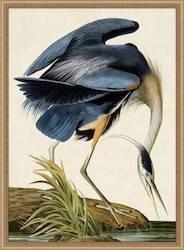 Oiseau 1