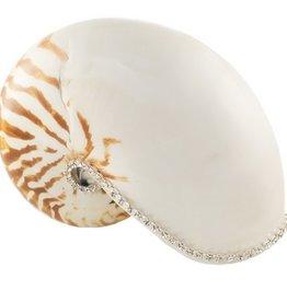 Nautilus Natural Shell