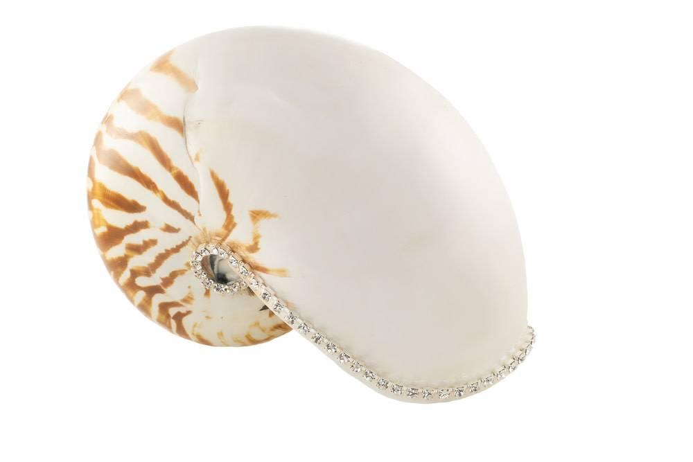 Nautilus Natural w/Diamonds