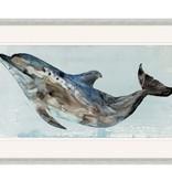 Playful Dolphin 2
