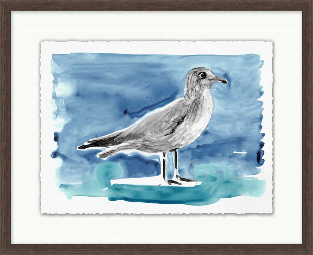 Lowcountry Gulls 4