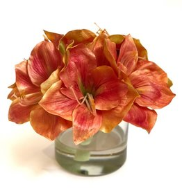 "Amaryllis x3 in 5"" Cylinder-Faux Water (Coral)"