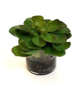 "Succulent in 3"" Cylinder-Faux Water/Stones (Green)"