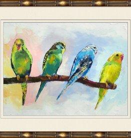 Parakeet Family 1