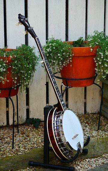 Stelling Red Fox Banjo
