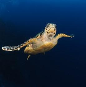 72 Aquatics Little Cayman - April 2018