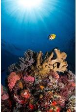 72 Aquatics West Komodo, Indonesia - May 2018