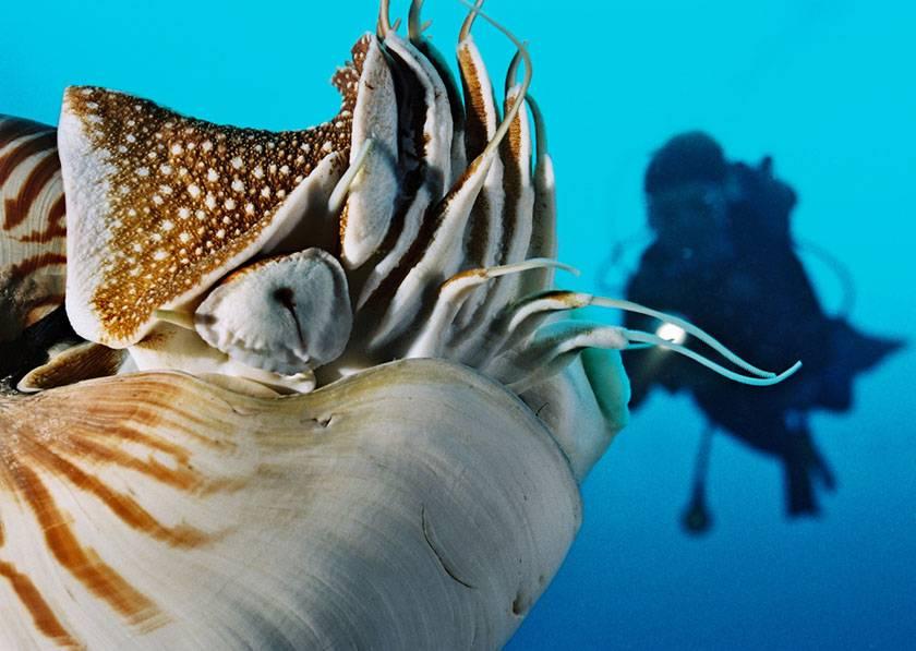 Palau Ocean Hunter 3 - December 2018