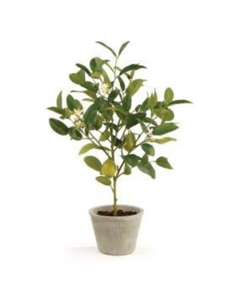 """Lemon Topiary 24"""""""