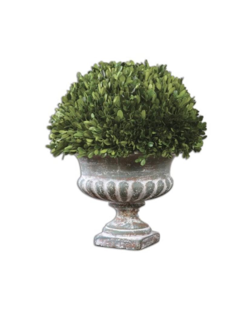 Garden Urn Boxwood ...