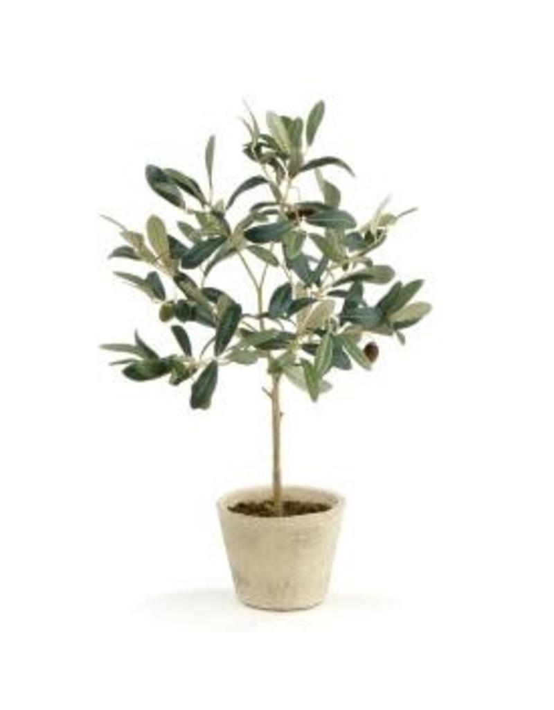 Olive Tree W Fruit In Pot Wishbone Home Design