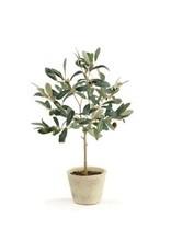 Olive Tree w/ Fruit in Pot