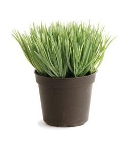 Mini Potted Grass