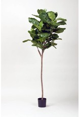 5' Fiddle Fig Leaf Tree