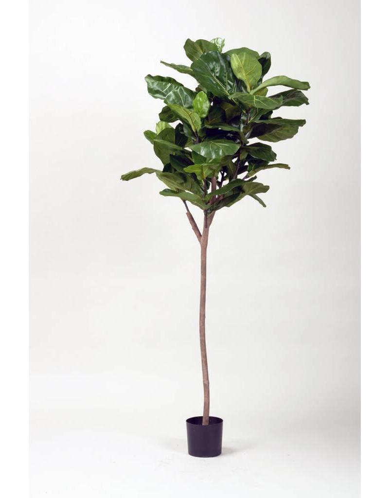 5' Fiddle Fig Leaf Tree