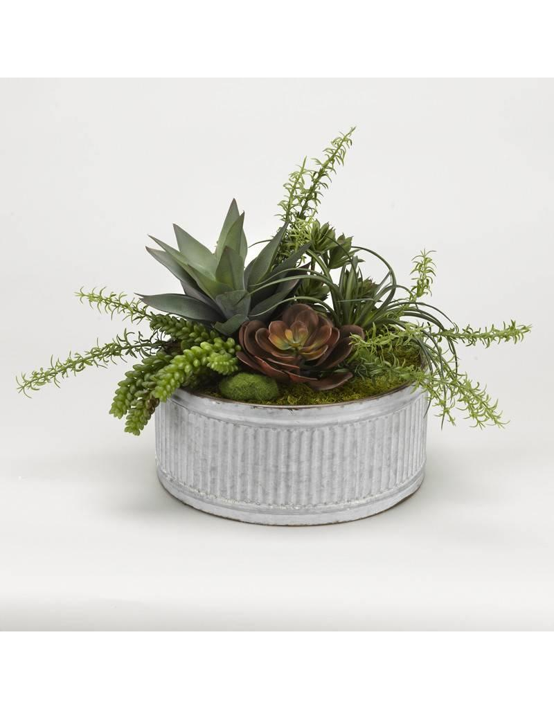 Succulents in Tin Planter