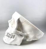 Eisco Labs Human Skull Model